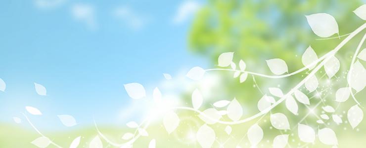 植物幹細胞のイメージ画像